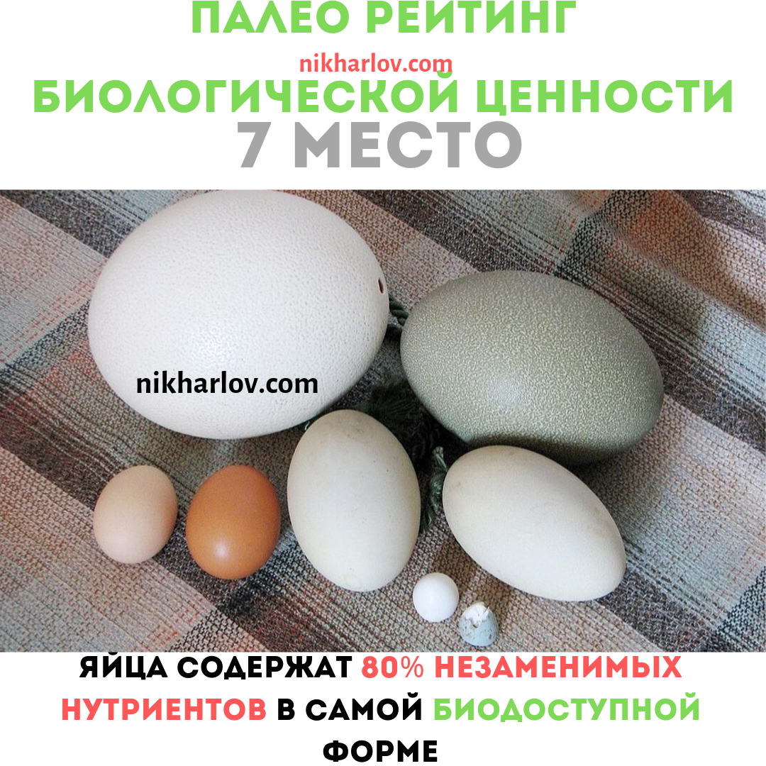 Яйца полезная еда Доктор Ник палео рейтинг