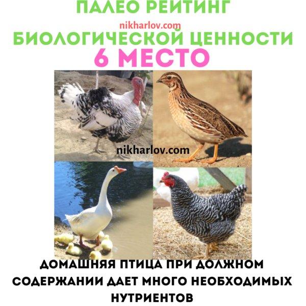 Домашняя птица доктор ник полезная еда палео рейтинг