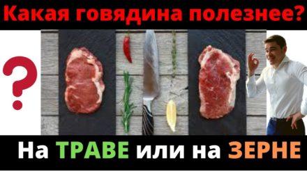 Какая говядина лучше: травяного откорма или зернового откорма