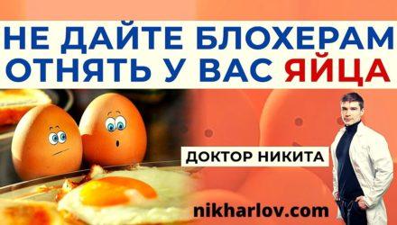 Яйцо куриное: польза и вред. Ешьте яйца смело – не дайте их отнять!